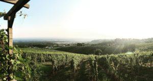 Blick über die Weinberge der Südsteiemark