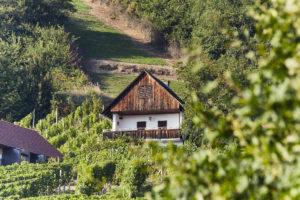 Weinurlaub im Ferienhaus Südsteiermark